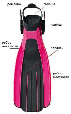 Анатомия ласты